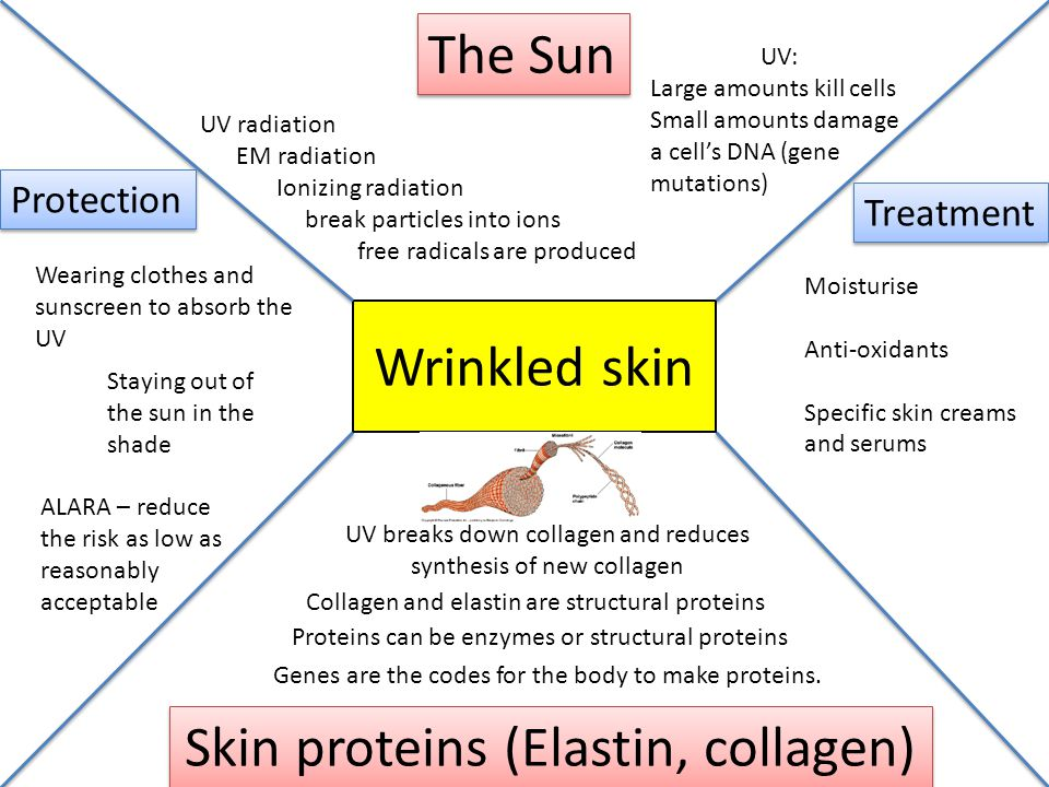 Wrinkled skin The Sun Skin proteins (Elastin, collagen) Protection Treatment UV radiation EM radiation Ionizing radiation break particles into ions fr