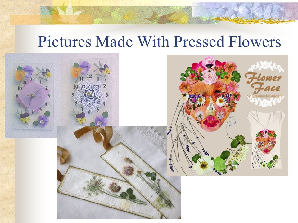 Pictures Made With Pressed Flowers