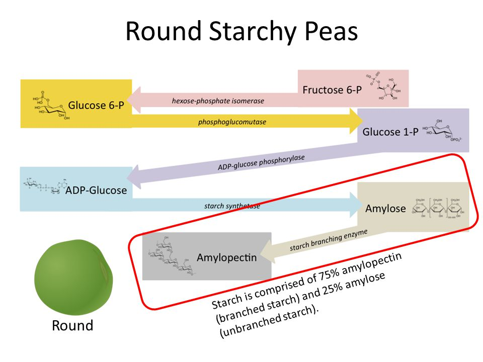 Round Starchy Peas Round Starch is comprised of 75% amylopectin (branched starch) and 25% amylose (unbranched starch).