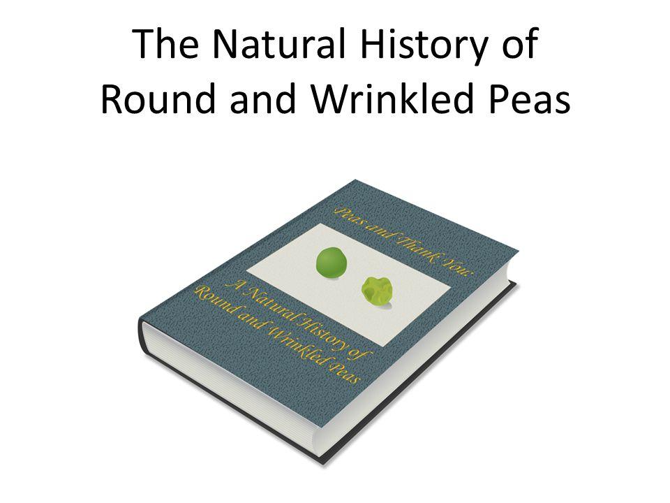 Fact Sheet: Pisum sativum Common names: Field peas.