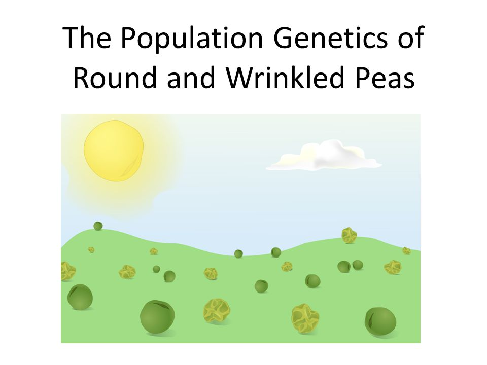 The Population Genetics of Round and Wrinkled Peas