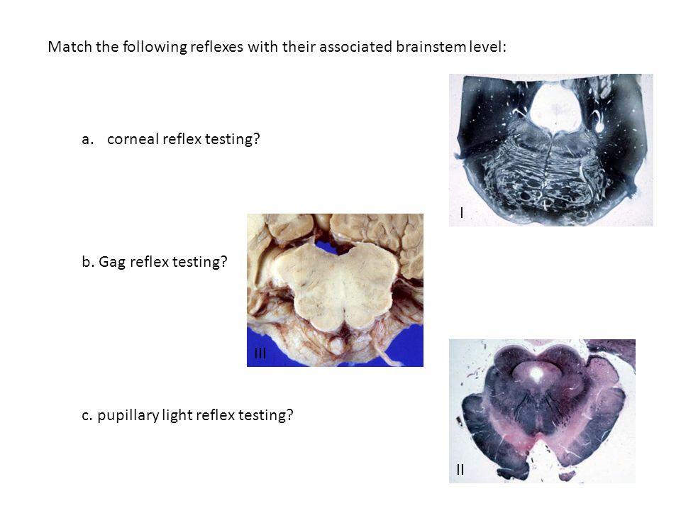 Match the following reflexes with their associated brainstem level: a.corneal reflex testing.