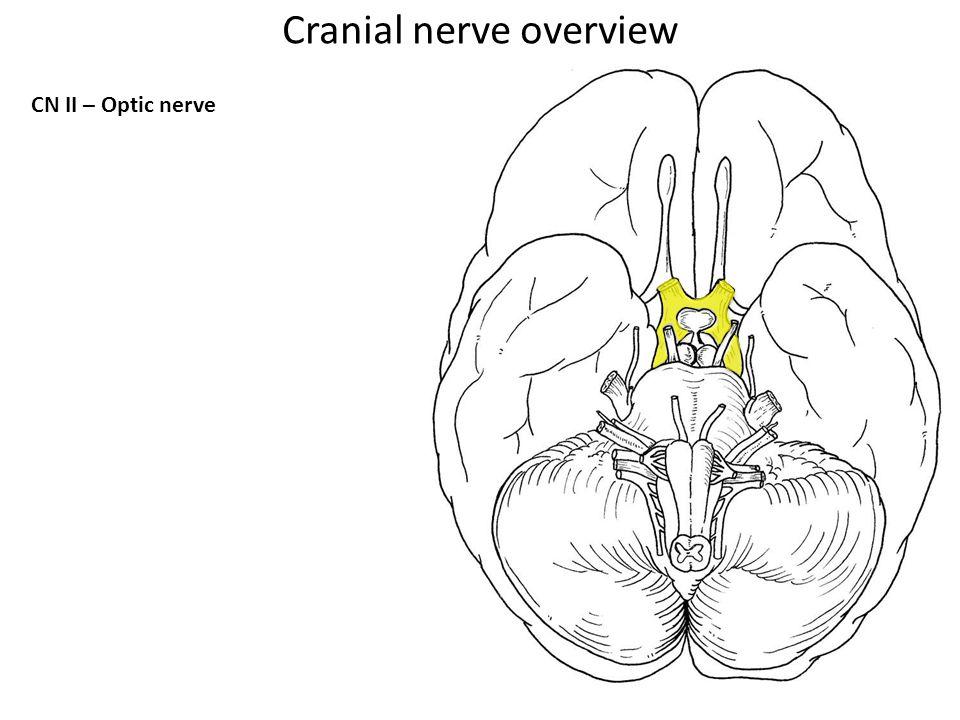 CN II – Optic nerve Cranial nerve overview