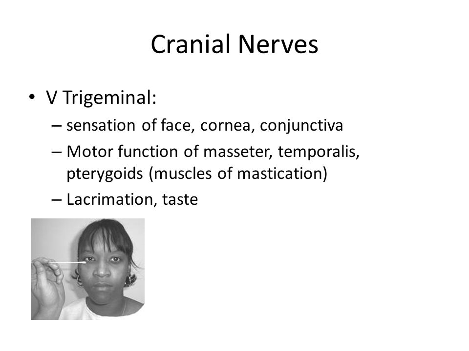 Cranial Nerves V Trigeminal: – sensation of face, cornea, conjunctiva – Motor function of masseter, temporalis, pterygoids (muscles of mastication) – Lacrimation, taste