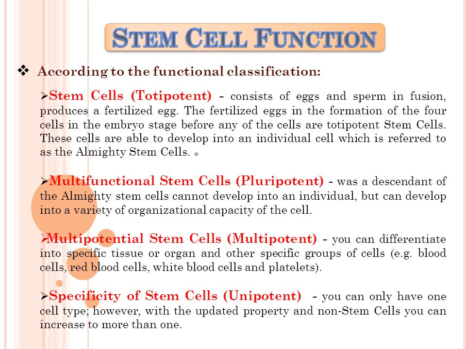  According to the functional classification:  Stem Cells (Totipotent) - consists of eggs and sperm in fusion, produces a fertilized egg.
