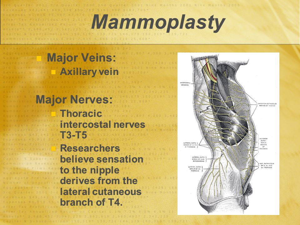 Mammoplasty Major Veins: Axillary vein Major Nerves: Thoracic intercostal nerves T3-T5 Researchers believe sensation to the nipple derives from the la