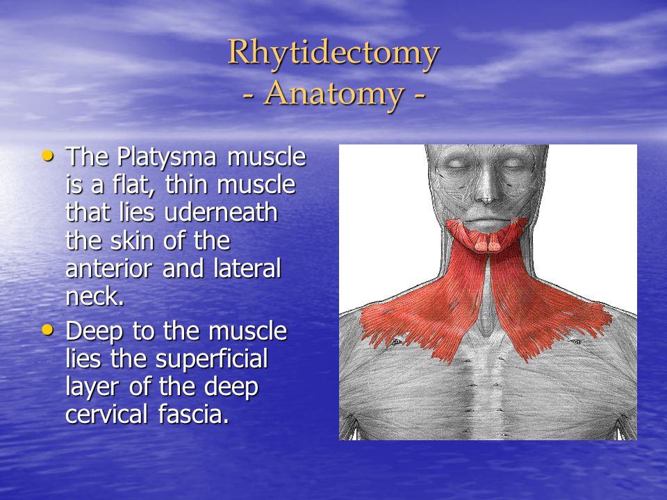 Rhytidectomy - Anatomy - The Platysma muscle is a flat, thin muscle that lies uderneath the skin of the anterior and lateral neck. The Platysma muscle