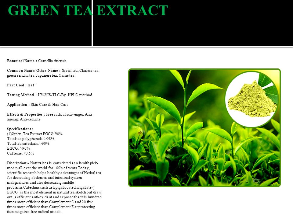 GREEN TEA EXTRACT Botanical Name : Camellia sinensis Common Name/ Other Name : Green tea, Chinese tea, green sencha tea, Japanese tea, Yame tea Part Used : leaf Testing Method : UV-VIS-TLC-By HPLC method Application : Skin Care & Hair Care Effects & Properties : Free radical scavenger, Anti- ageing, Anti-cellulite Specifications : (1)Green Tea Extract EGCG 90% Total tea polyphenols: >98% Total tea catechins: >90% EGCG: >90% Caffeine: <0.5% Discription:- Natural tea is considered as a health pick- me-up all over the world for 100 s of years.Today, scientific research helps healthy advantages of Herbal tea for decreasing abdomen and intestinal system malignancies and also decreasing middle problems.Catechins such as Epigallocatechingallate ( EGCG )is the most element in natural tea sketch out draw out, a efficient anti-oxidant and exposed that it is hundred times more efficient than Complement C and 20 five times more efficient than Complement E at protecting tissuesagainst free radical attack.