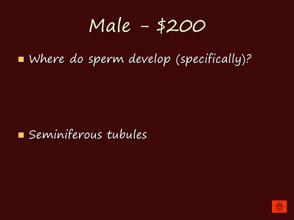 Male - $200 Where do sperm develop (specifically).