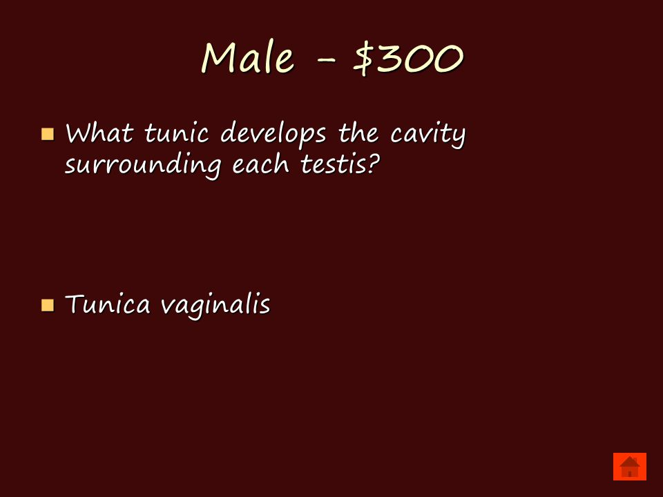 Male - $300 What tunic develops the cavity surrounding each testis.
