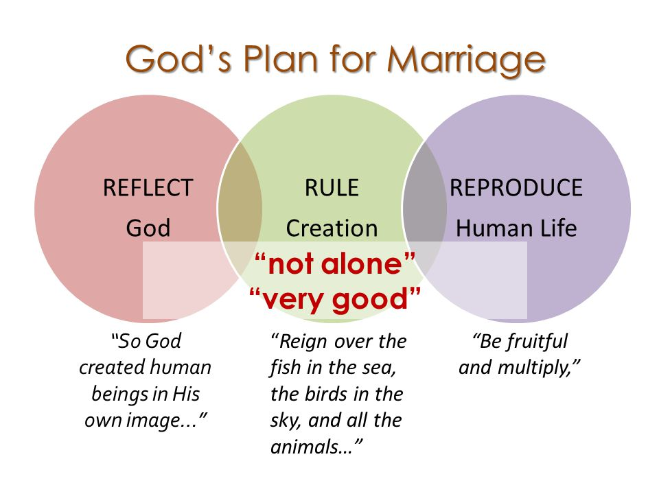 REFLECT God RULE Creation REPRODUCE Human Life God's Plan for Marriage So God created human beings in His own image… Reign over the fish in the sea, the birds in the sky, and all the animals… Be fruitful and multiply, not alone very good