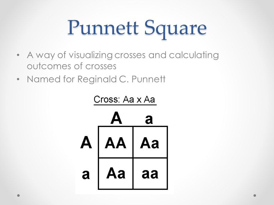 Punnett Square A way of visualizing crosses and calculating outcomes of crosses Named for Reginald C.