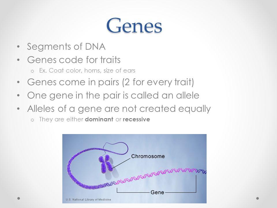 Genes Segments of DNA Genes code for traits o Ex.