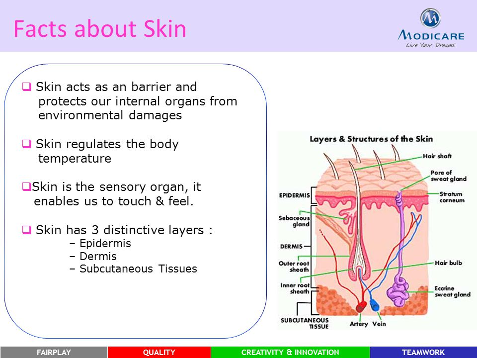 FAIRPLAYQUALITYCREATIVITY & INNOVATIONTEAMWORK Facts about Skin  Skin acts as an barrier and protects our internal organs from environmental damages