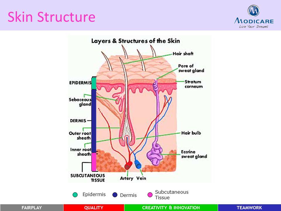 FAIRPLAYQUALITYCREATIVITY & INNOVATIONTEAMWORK Skin Structure Epidermis Dermis Subcutaneous Tissue