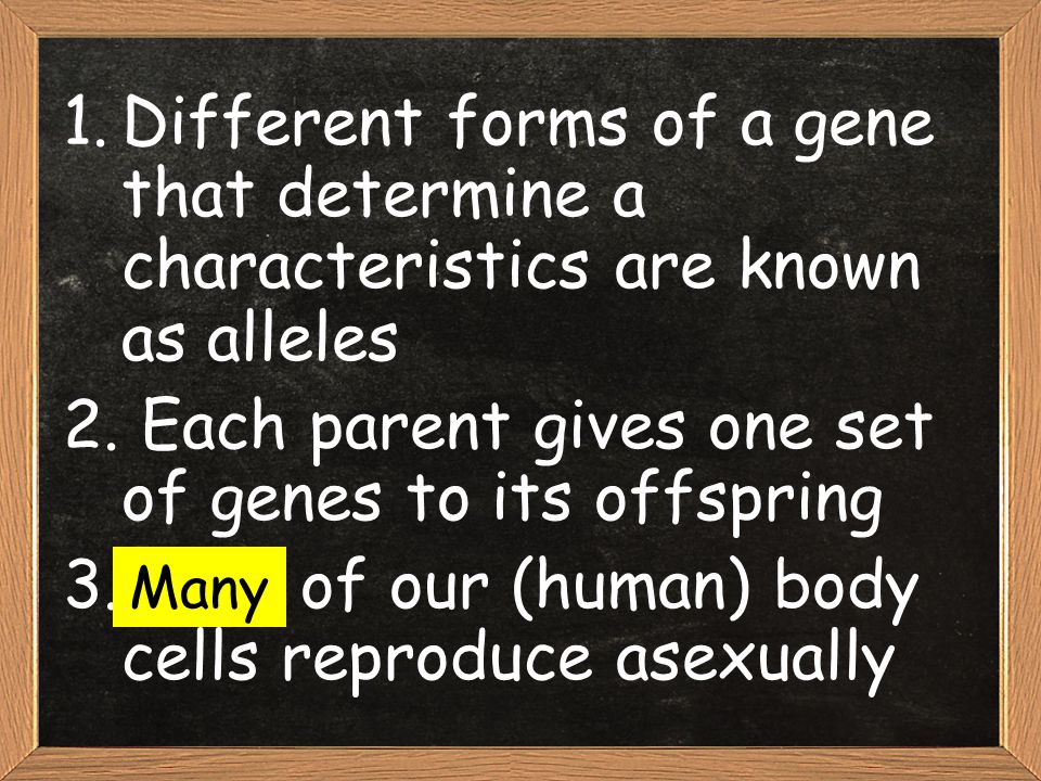 1.Different forms of a gene that determine a characteristics are known as alleles 2. Each parent gives one set of genes to its offspring 3.None of our