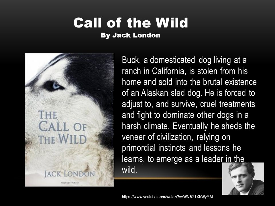 Buck, a domesticated dog living at a ranch in California, is stolen from his home and sold into the brutal existence of an Alaskan sled dog. He is for