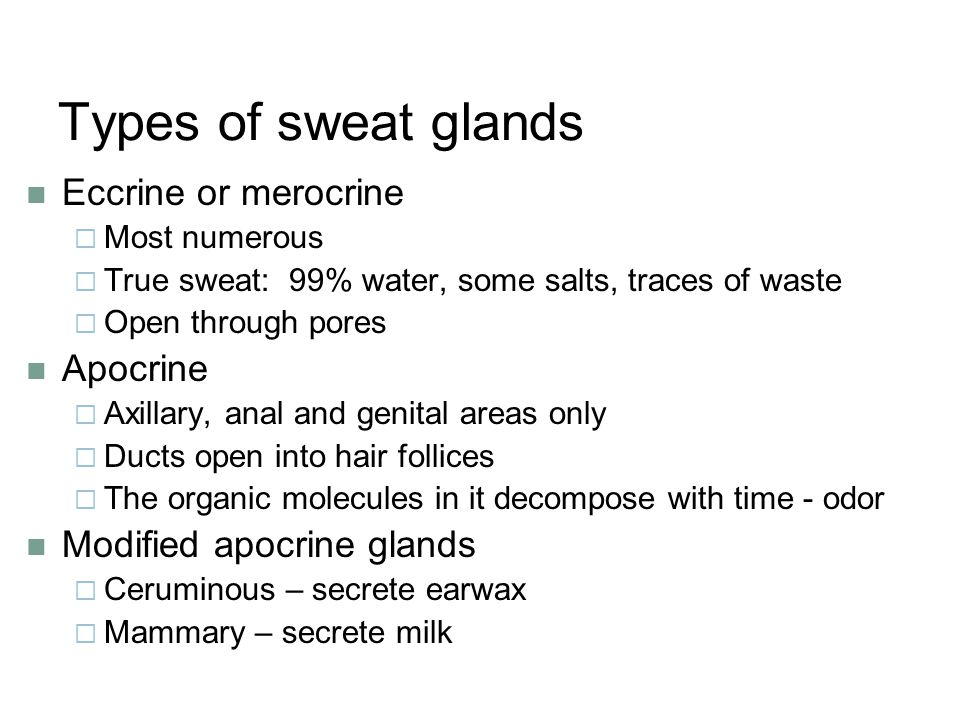 Types of sweat glands Eccrine or merocrine  Most numerous  True sweat: 99% water, some salts, traces of waste  Open through pores Apocrine  Axilla