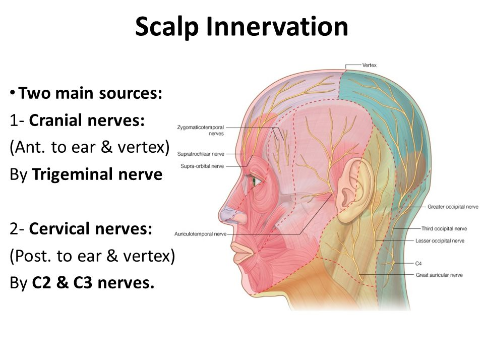 Scalp Innervation Trigeminal branches : (Ant.