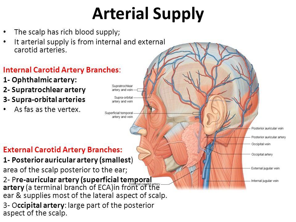 Venous Drainage Usually follows the arteries: 1- Supratrochlear vein 2- Supra-orbital vein 3- Pre-auricular vein (superficial temporal vein) 3- Posterior auricular vein 4- Occipital vein