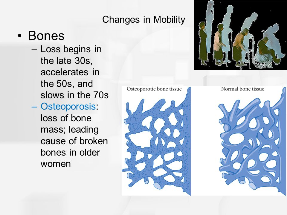 Bones –Loss begins in the late 30s, accelerates in the 50s, and slows in the 70s –Osteoporosis: loss of bone mass; leading cause of broken bones in older women