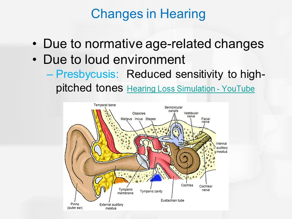 Changes in Hearing Due to normative age-related changes Due to loud environment –Presbycusis: Reduced sensitivity to high- pitched tones Hearing Loss Simulation - YouTube Hearing Loss Simulation - YouTube