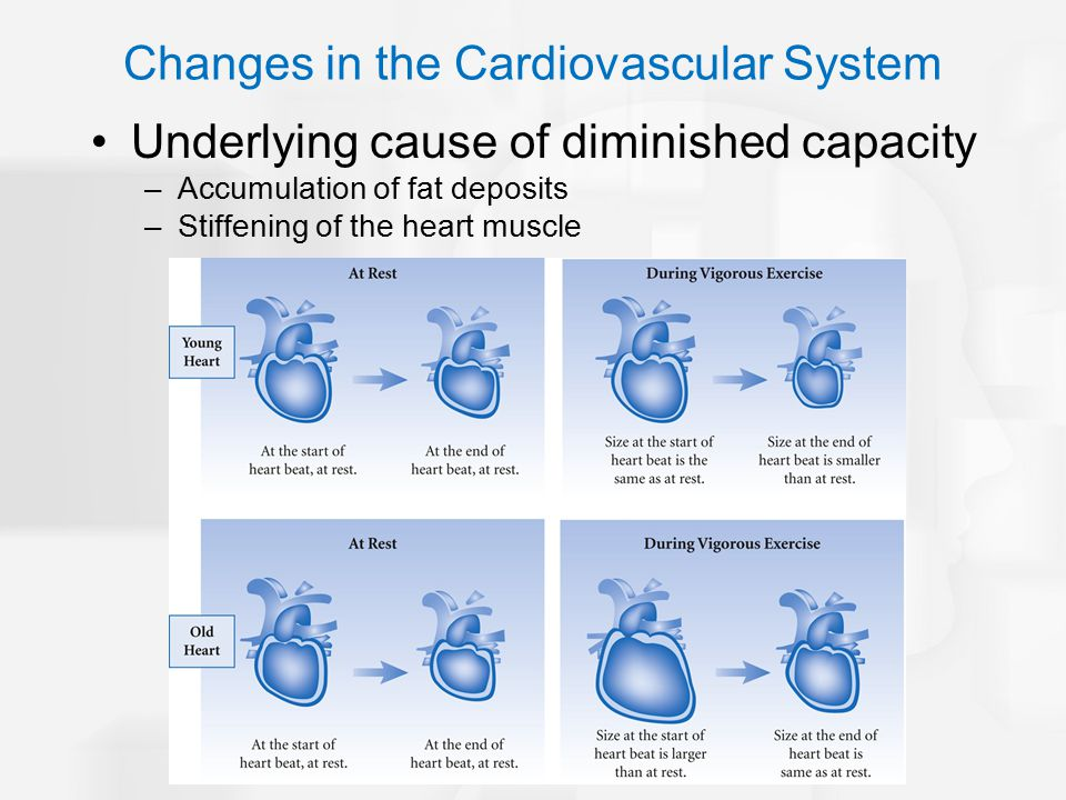 Underlying cause of diminished capacity –Accumulation of fat deposits –Stiffening of the heart muscle Changes in the Cardiovascular System