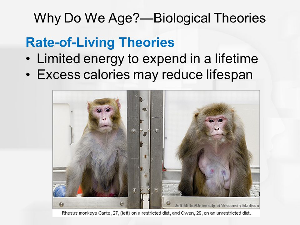 Why Do We Age —Biological Theories Rate-of-Living Theories Limited energy to expend in a lifetime Excess calories may reduce lifespan
