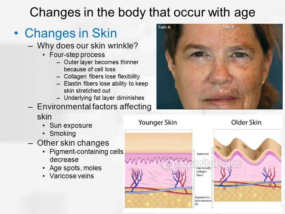 Changes in Skin –Why does our skin wrinkle? Four-step process –Outer layer becomes thinner because of cell loss –Collagen fibers lose flexibility –Ela
