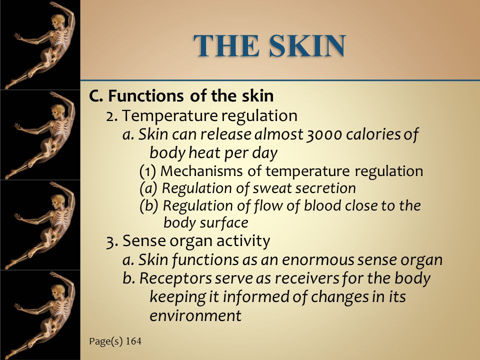 THE SKIN C. Functions of the skin 2. Temperature regulation a. Skin can release almost 3000 calories of body heat per day (1) Mechanisms of temperatur