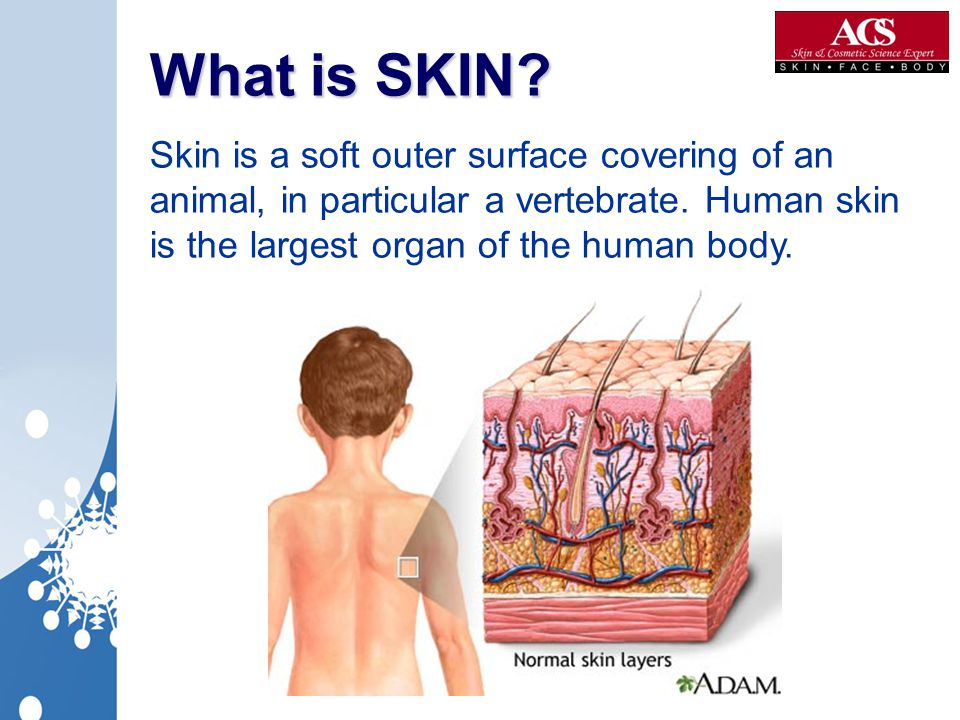 What is SKIN? What is SKIN? Skin is a soft outer surface covering of an animal, in particular a vertebrate. Human skin is the largest organ of the hum
