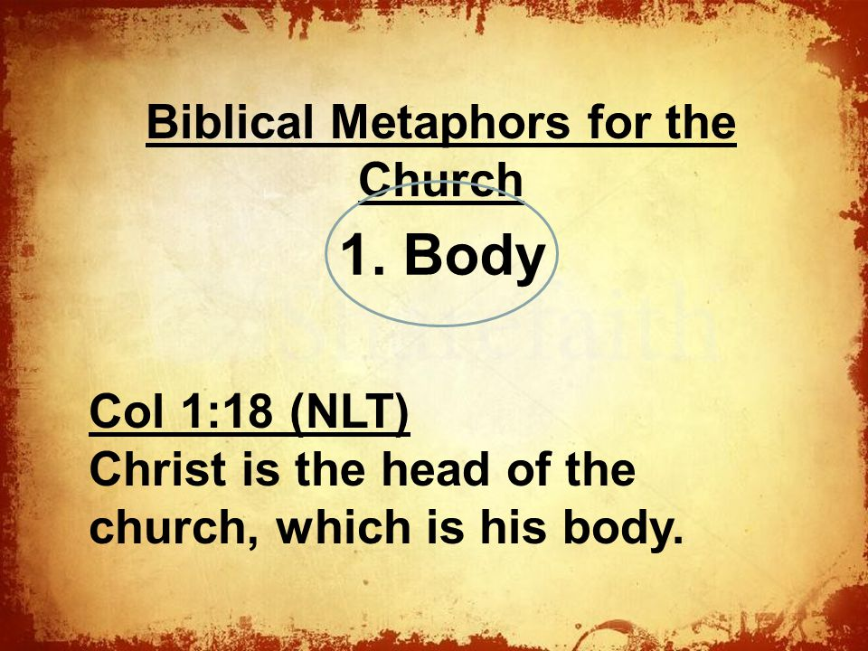 The Biblical Metaphors for the Church Col 1:18 (NLT) Christ is the head of the church, which is his body.