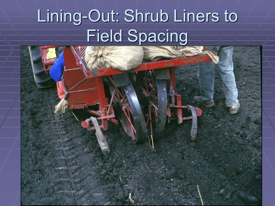 Lining-Out: Shrub Liners to Field Spacing