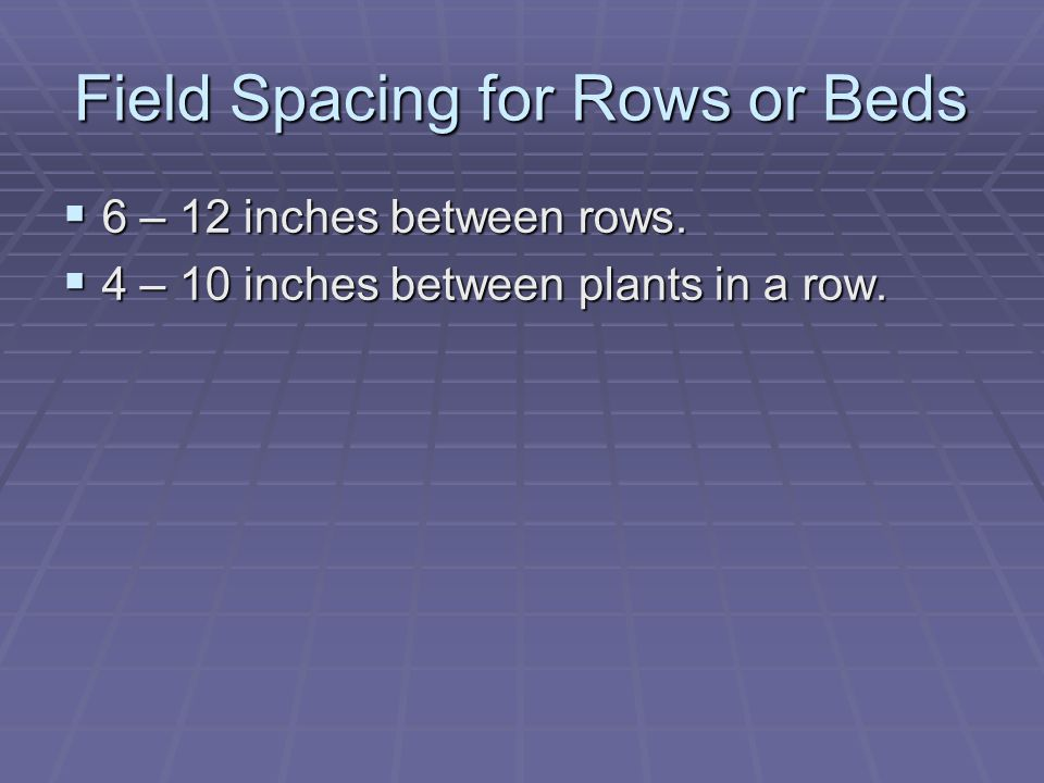 Field Spacing for Rows or Beds  6 – 12 inches between rows.  4 – 10 inches between plants in a row.