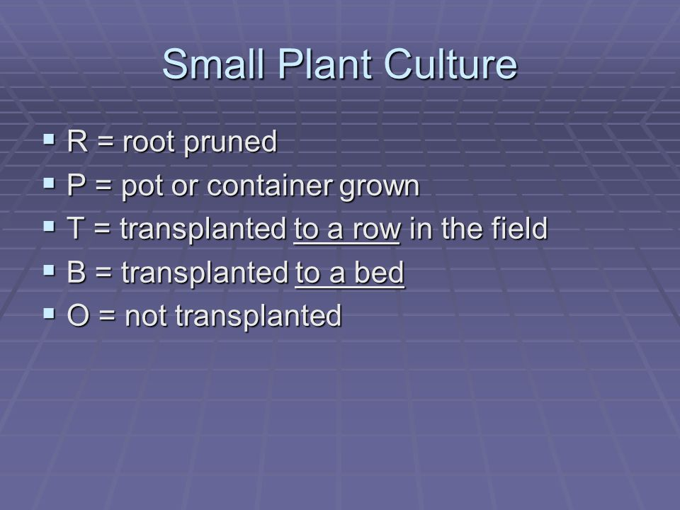 Small Plant Culture  R = root pruned  P = pot or container grown  T = transplanted to a row in the field  B = transplanted to a bed  O = not tran