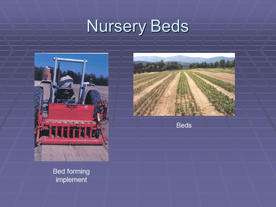 Nursery Beds Bed forming implement Beds