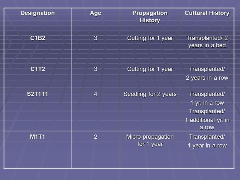 DesignationAge Propagation History Cultural History C1B23 Cutting for 1 year Transplanted/ 2 years in a bed C1T23 Cutting for 1 year Transplanted/ 2 y