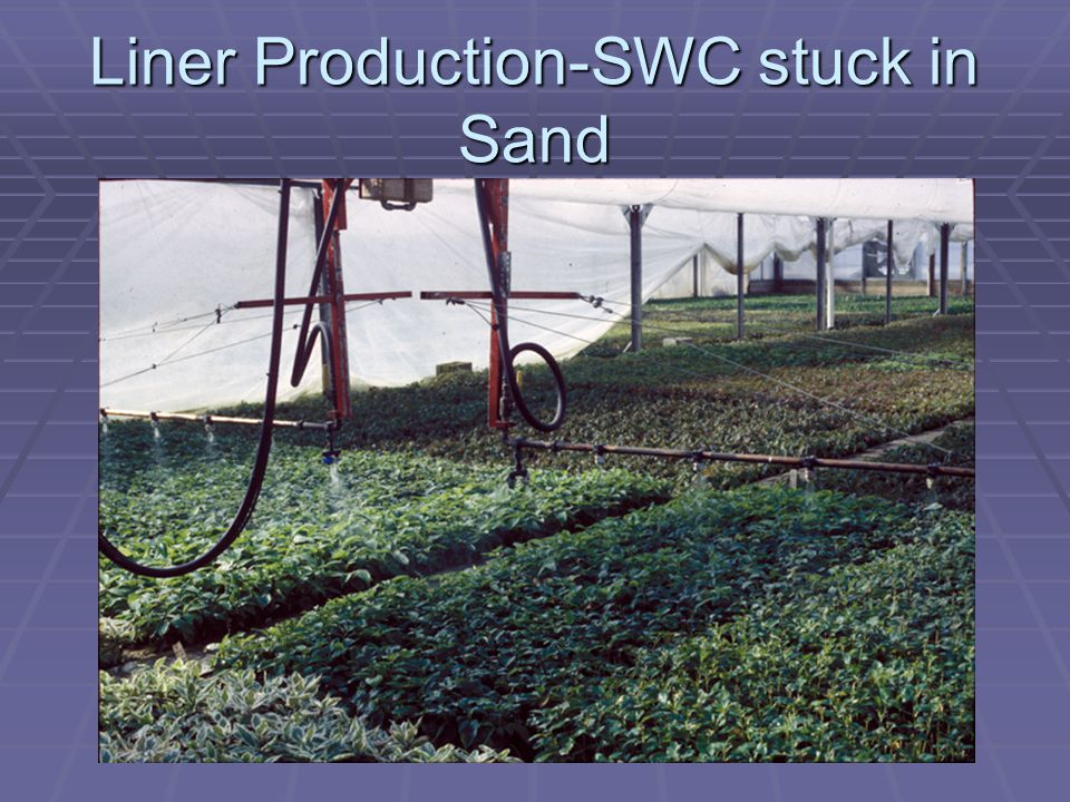 Bottom Line Small Plant Culture Small liners go in Bigger liners come out