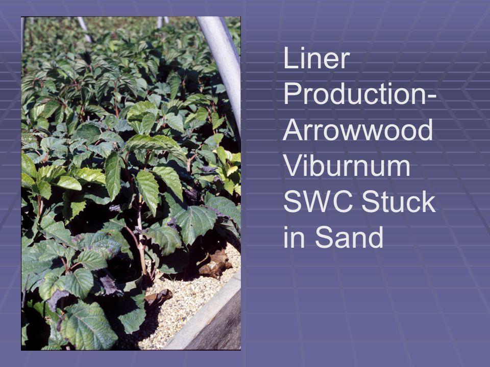 Liner Production- Arrowwood Viburnum SWC Stuck in Sand