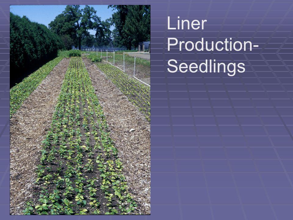 Liner Production- Seedlings