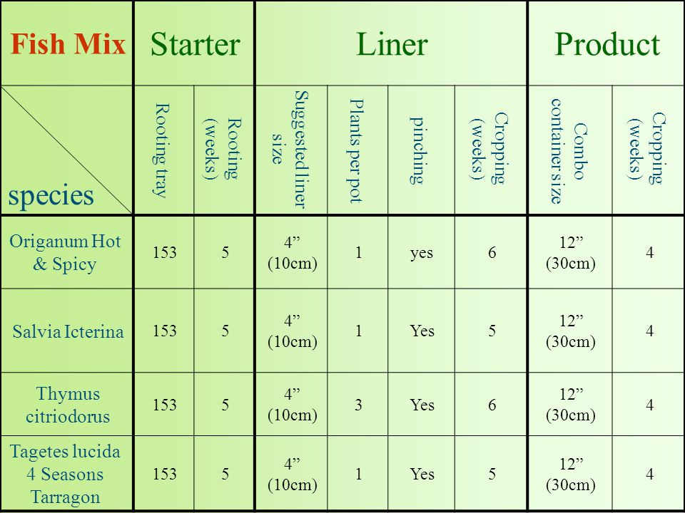 ProductLinerStarter Fish Mix Cropping (weeks) Combo container size Cropping (weeks) pinching Plants per pot Suggested liner size Rooting (weeks) Rooting tray species 4 12 (30cm) 6yes1 4 (10cm) 5153 Origanum Hot & Spicy 4 12 (30cm) 5Yes1 4 (10cm) 5153 Salvia Icterina 4 12 (30cm) 6Yes3 4 (10cm) 5153 Thymus citriodorus 4 12 (30cm) 5Yes1 4 (10cm) 5153 Tagetes lucida 4 Seasons Tarragon