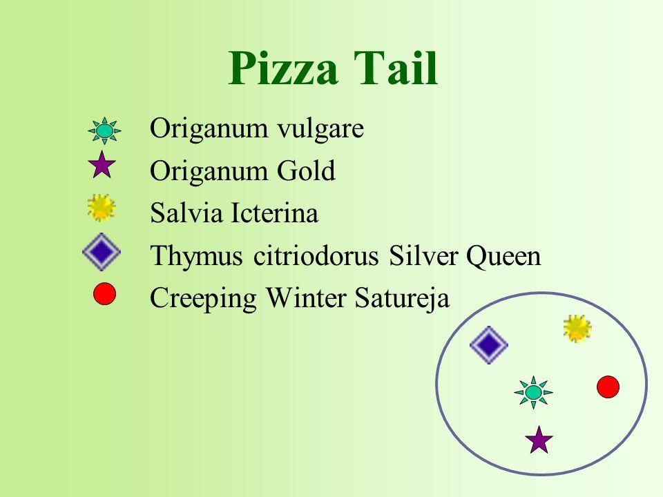 Origanum vulgare Origanum Gold Salvia Icterina Thymus citriodorus Silver Queen Creeping Winter Satureja