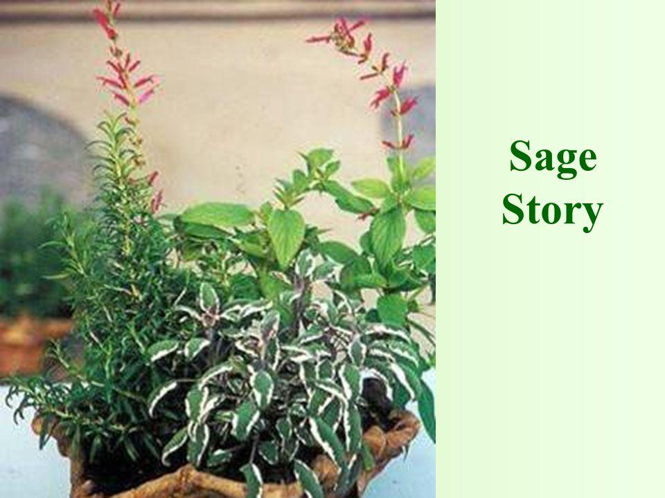 Sage Story