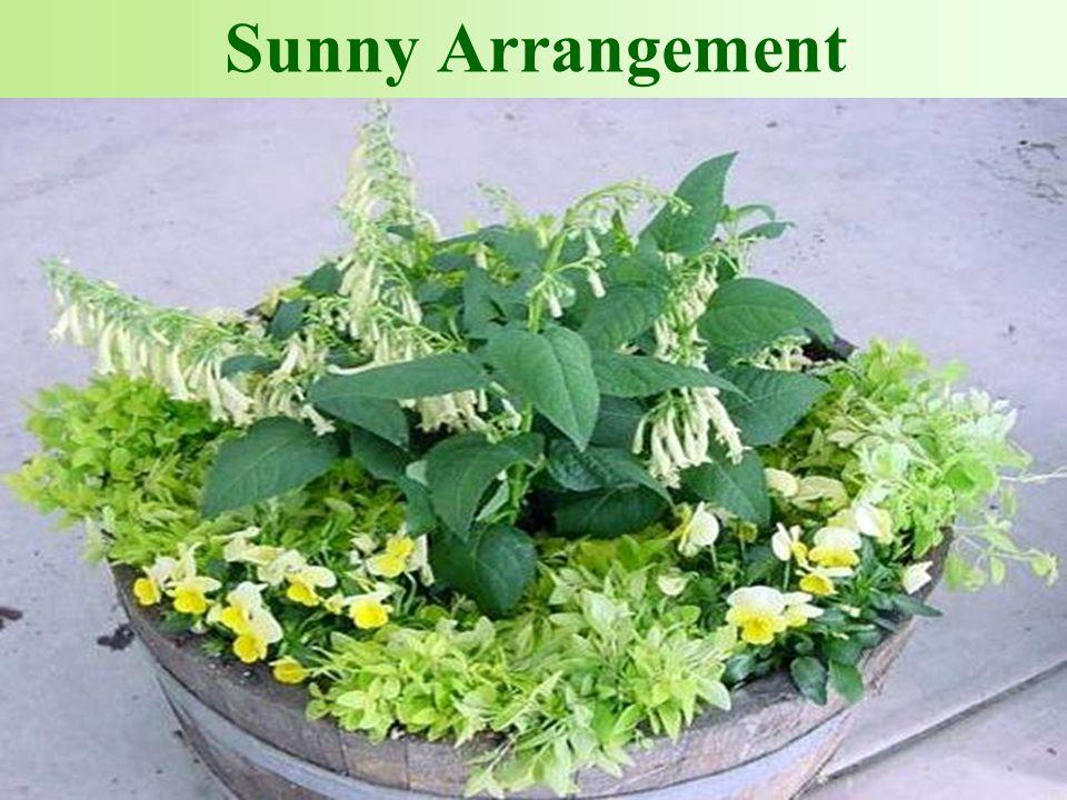 Sunny Arrangement