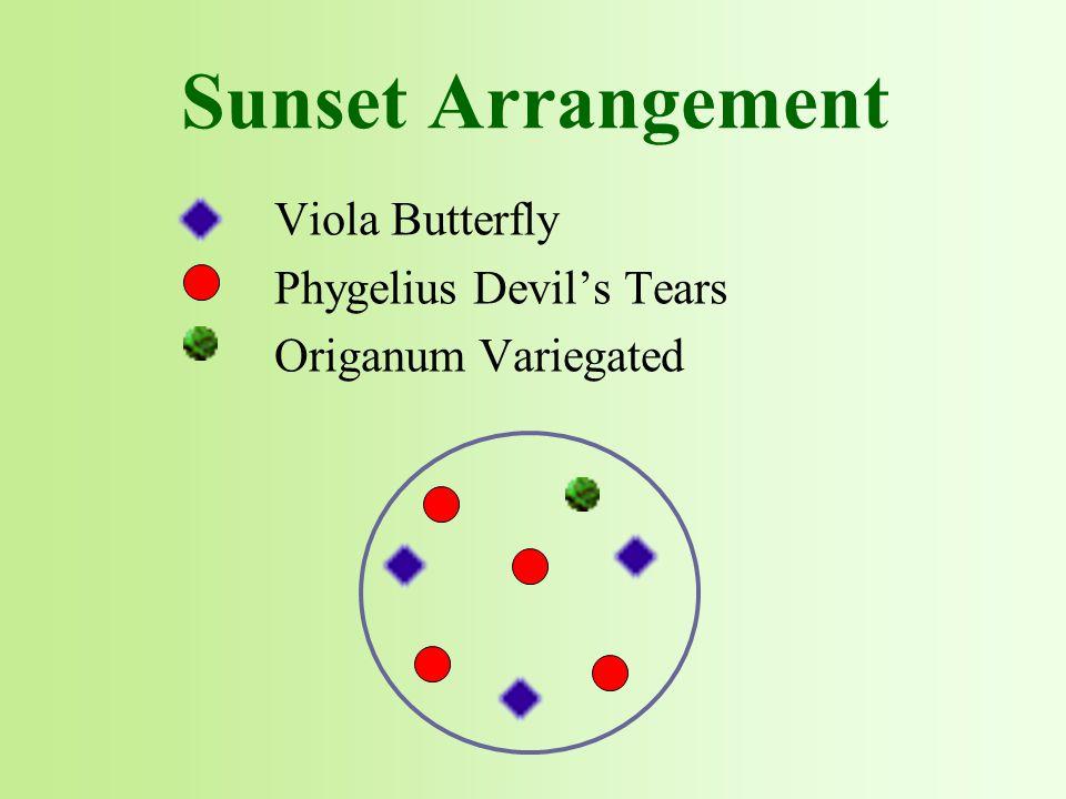 Viola Butterfly Phygelius Devil's Tears Origanum Variegated