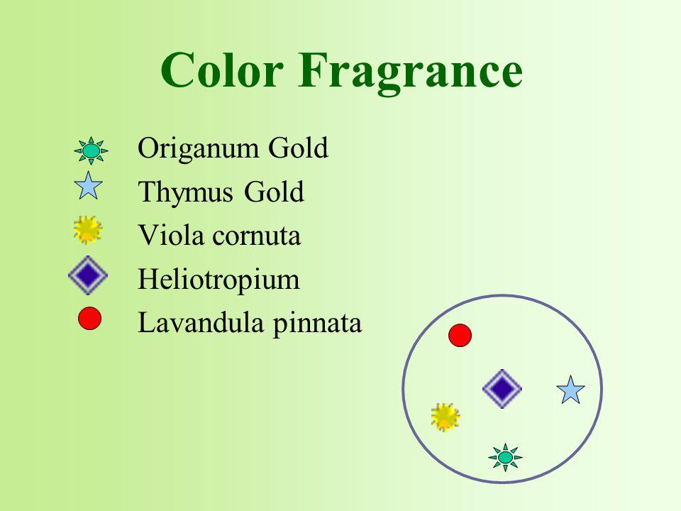 Origanum Gold Thymus Gold Viola cornuta Heliotropium Lavandula pinnata
