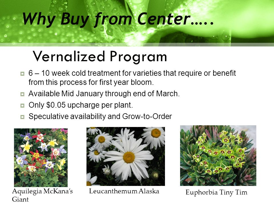 Vernalized Program Why Buy from Center…..