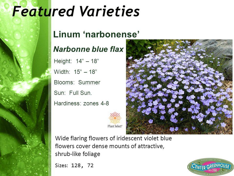 "Featured Varieties Linum 'narbonense' Narbonne blue flax Height: 14"" – 18"" Width: 15"" – 18"" Blooms: Summer Sun: Full Sun. Hardiness: zones 4-8 Wide fl"