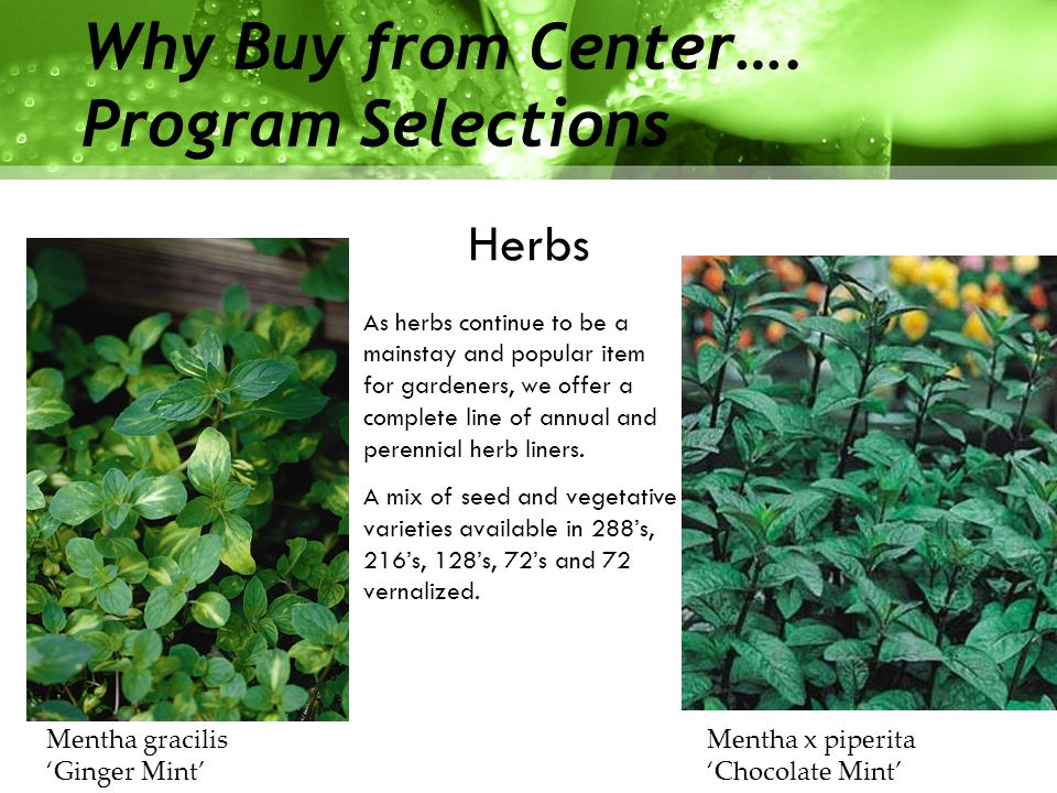 Herbs Why Buy from Center….