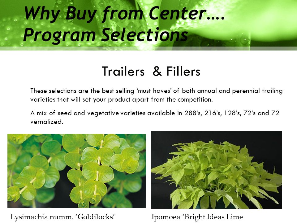 Available Tray Sizes  72 tray (sold as72 ) Vegetative Program  Perennials, Herbs, Trailers & Fillers.